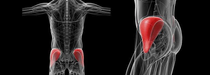 Le moyen fessier : situation anatomique et traitement des tendinopathies