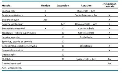 tabelau3-musculature-region-cervicale-basse